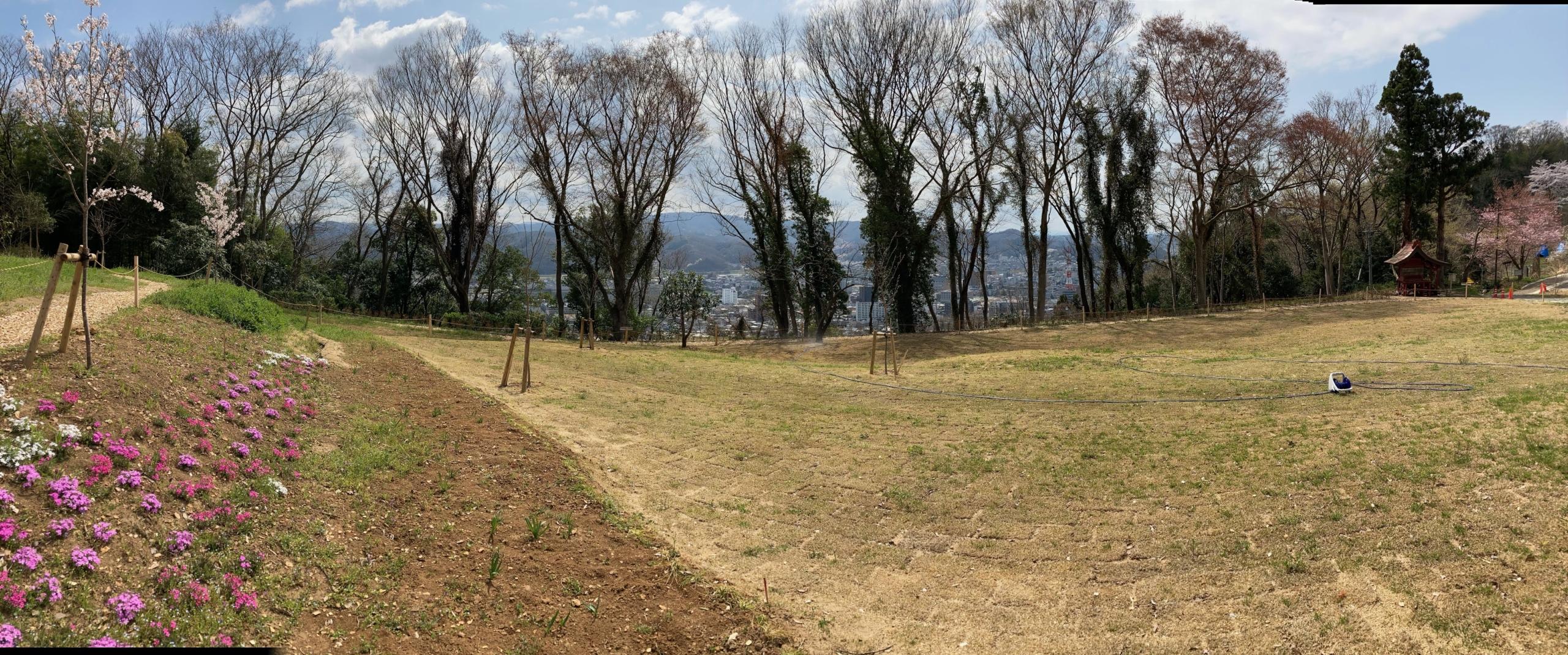 芝生エリア 芝桜見ごろ おみさか花広場 信夫山 しのぶやま